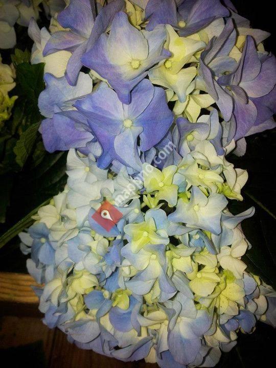 Berits Blomsterforretning