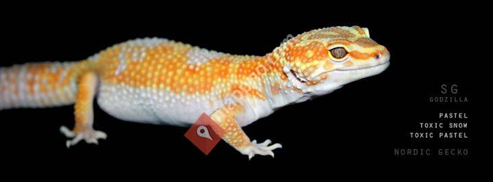 Nordic Gecko